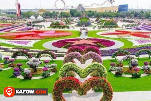 Miracle Garden Airplane Flowers