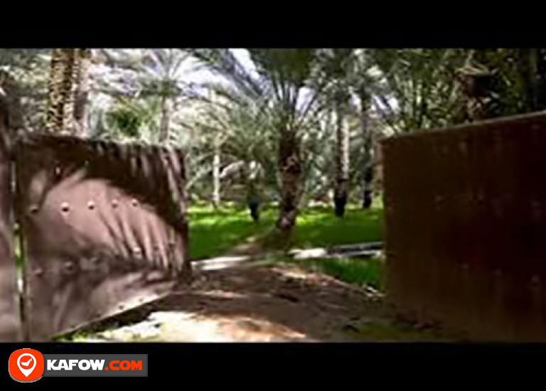 Qattara Oasis