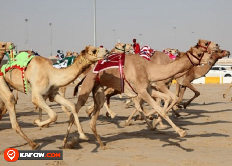 Track Allbsa for camel racing