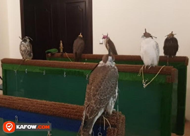 Nad Al Sheba for Falcons